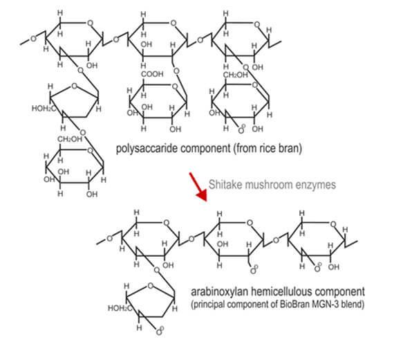 Biobran schema