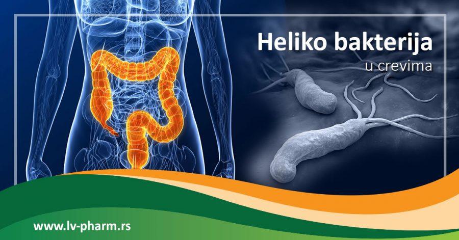 Heliko bakterija u crevima